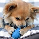 Ziggy, loves his toys by JayBeePhoto