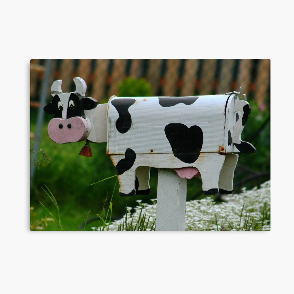 Cow MailBox Canvas Print