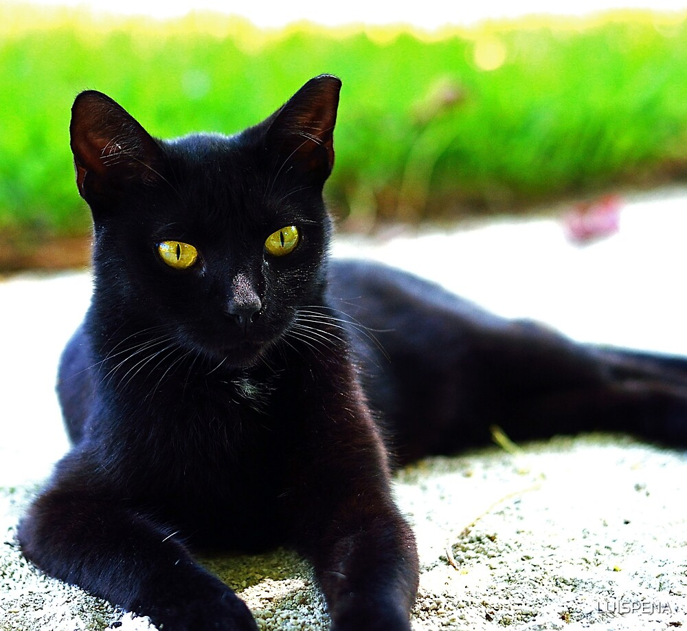 The Posing Cat by LUISPENA