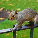 Squirrels Day Out by Jarrod Kamelski