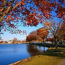 Autumn at Argyle Park by Holly Martinson