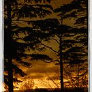 Tree Silouette v3-framed by Foxfire