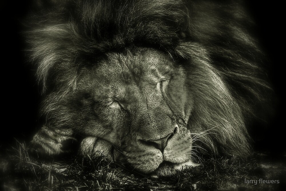 The Monarch sleeps  by larry flewers