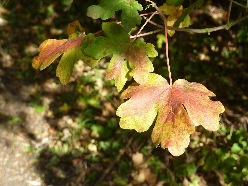 Autumn Colour by Anne Hargreaves