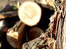 Wooden Portrait #3 by Benedikt Amrhein