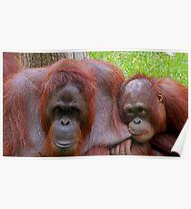Mother & Baby Orangutans Poster
