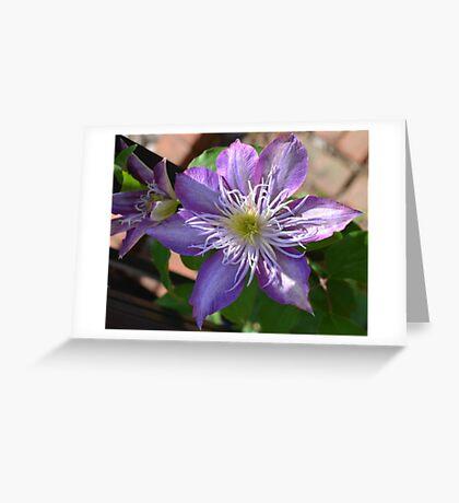 Purple Clematis Flower on Trellis  Greeting Card