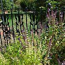 Basil in the herb garden by Paula Betz