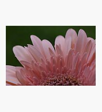 Pretty Pink Petals Photographic Print