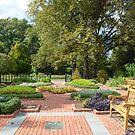 An Herb Garden by Paula Betz