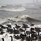 Goose Bumps by BonnieToll