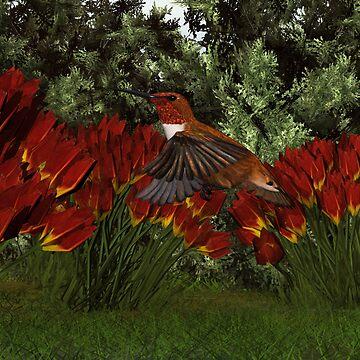 Rufous Hummingbird (Male) by Skyviper