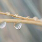 Rain by Ubernoobz