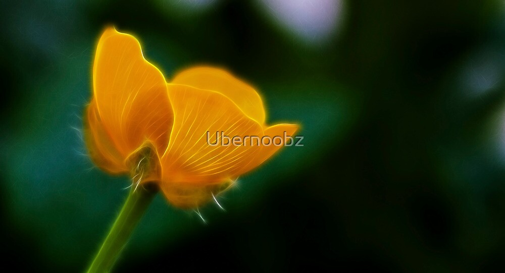 Buttercup by Ubernoobz