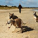 Whippet Beach by whippeteer