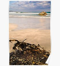 Seaweed at Carpenter Rocks Poster