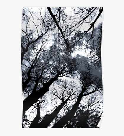 Surrounded by Trees Poster