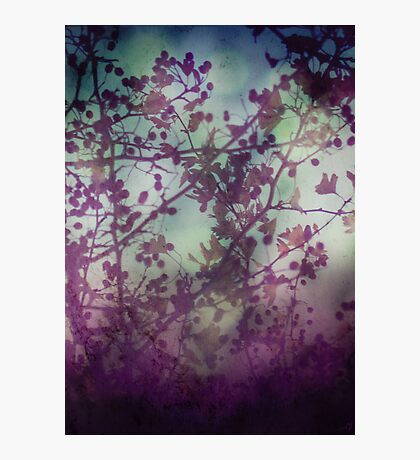 Midsummer Night Photographic Print