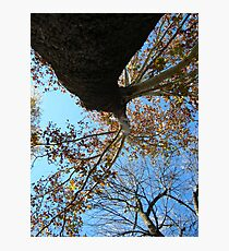 Fall Series 70 Photographic Print