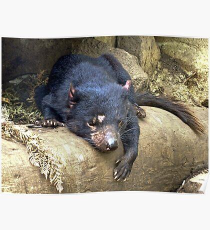 Tasmanian Devil #1 Poster