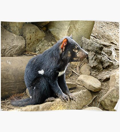 Tasmanian Devil #2 Poster