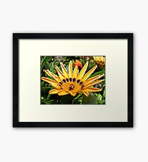 A SPOT OR TWO Framed Print