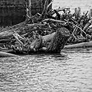 Drift Wood by barnsis