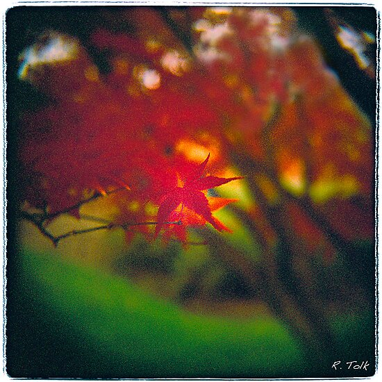 Red Leaf Sunset by Rebecca Tolk
