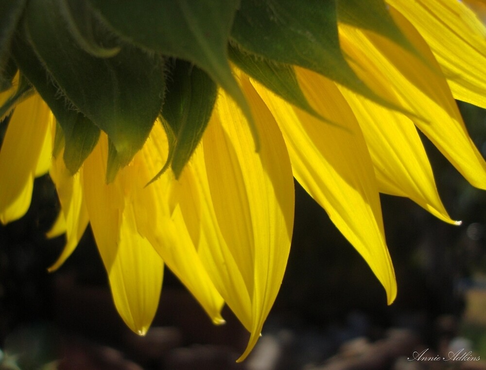 Sunny by Annie Adkins