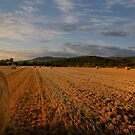 The  harvest is in by Mairead1