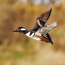 Canadian Ducks by Alinka