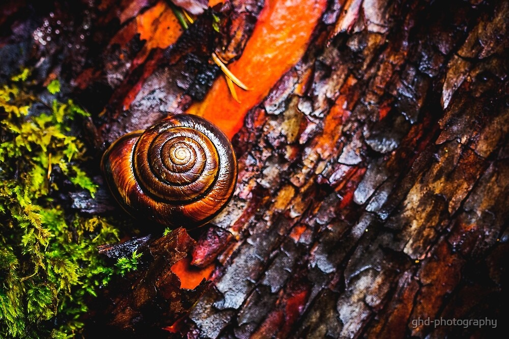 A Spiral Story In Burnt Orange by ghd-photography