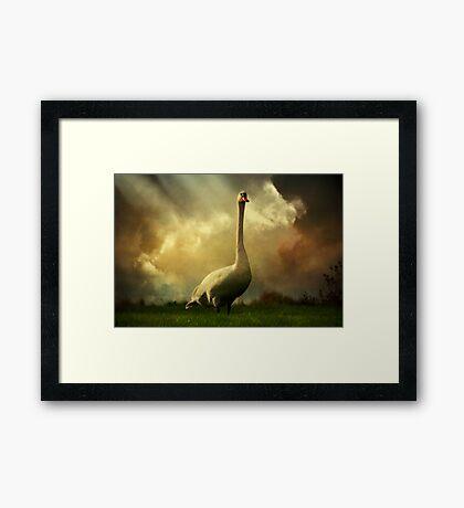 Swan Scene Framed Print