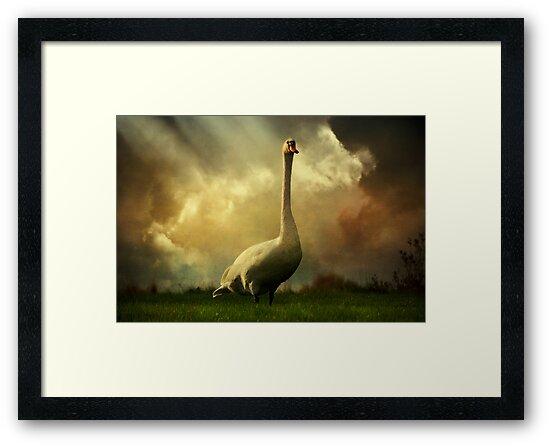 Swan Scene by ajgosling