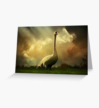 Swan Scene Greeting Card