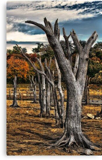 Fall 2011 Dead Poet Tree 1.0 by Scott Lebredo