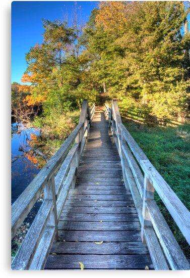 Morton Arboretum Bridge by Adam Bykowski