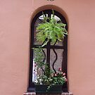 A Window In The Cours Saleya by Fara