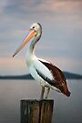 Pelican by Michael Howard