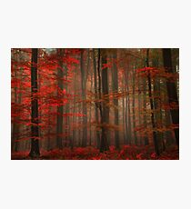 Enchanting Red Photographic Print