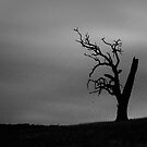Tree in Lysterfield, VIC by Andrejs Jaudzems