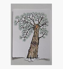 Wise Owl Tree (colour) Photographic Print