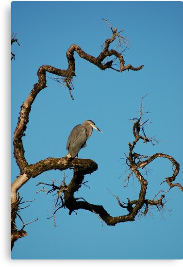 Heron's Looking at You Kid by sonomacounty