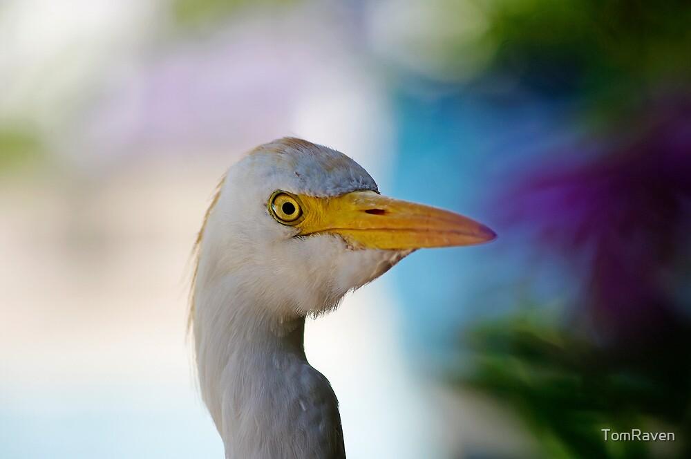Inquisitive Egret by TomRaven