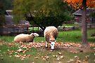 Enjoying the Fall Leaves by Elaine  Manley
