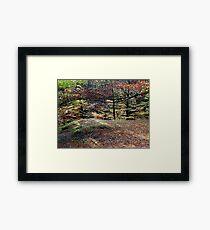 Autumn Shade  Framed Print