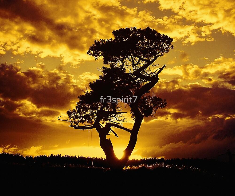 Tree Dance 2 by fr3spirit7