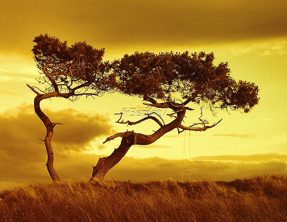 Tree Dance by fr3spirit7