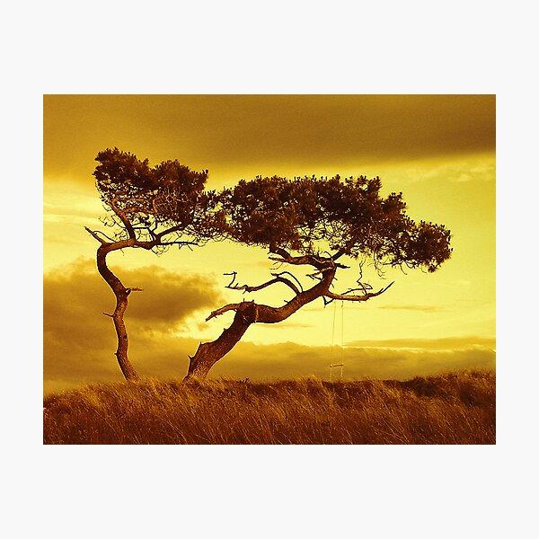Tree Dance Photographic Print