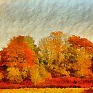 A Wiltshire wood, Autumn 2011 by David Carton